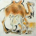 Белый верблюжонок, 1982