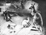 Завтрак у кенгуру, 1985