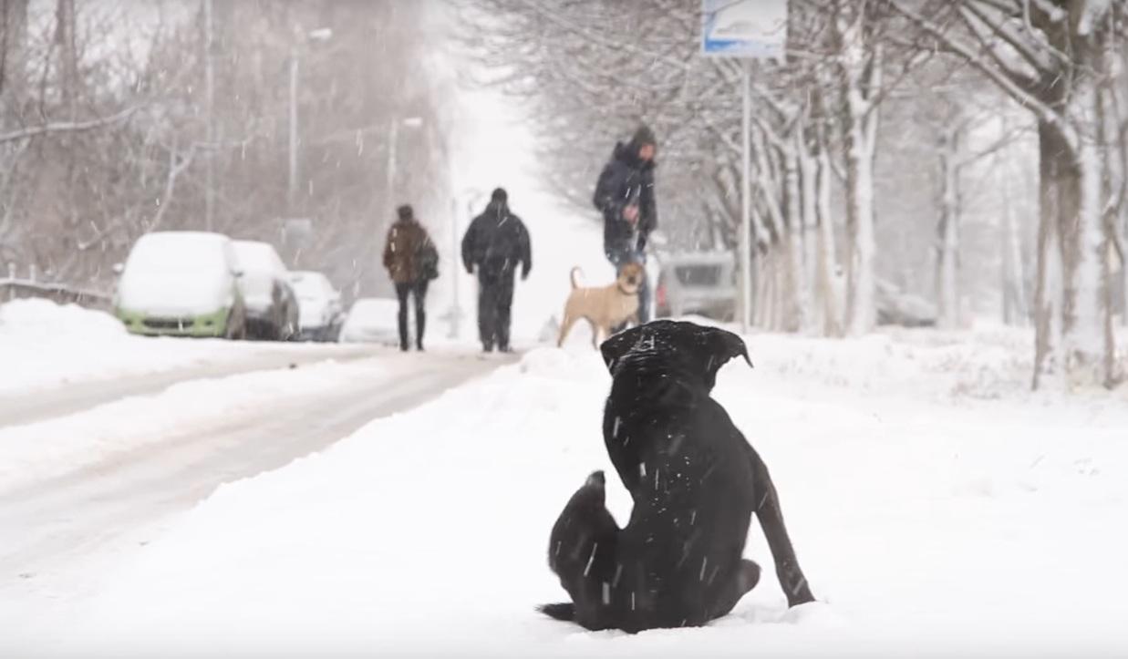 ВРостовской области кур, гусей иуток массово привьют отптичьего гриппа